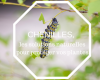 chenilles-des-solutions-naturelles-pour-proteger-vos-plantes