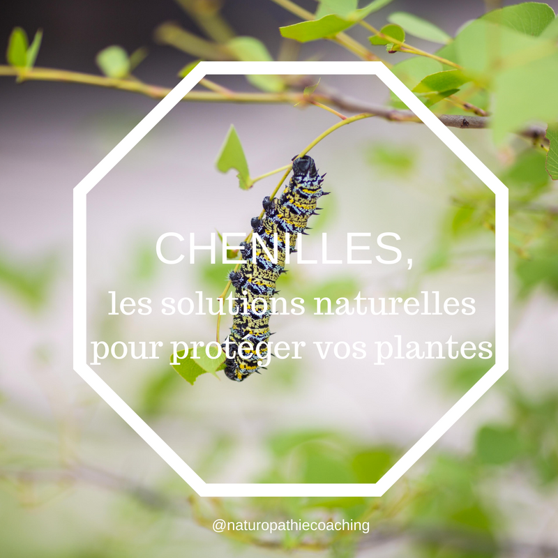 jardinage, jardin, ecologie, naturel, chenilles, green
